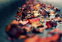 "Fall is in the air / ""Fall has always been my favorite season. The time when everything bursts with its last beauty, as if nature had been saving up all year for the grand finale."" - Lauren DeStefano, Wither"