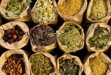 Herbal Options / Herbal Medicine from the perspective of an Herbalist.  Taking the time to listen to ancient wisdom & current scientific evidence.  / by Julie