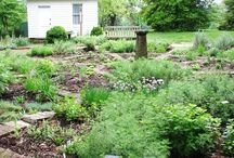 Herb Plants & Gardens / Know the Plants.  What they Look like. Where they like to Grow / by Julie