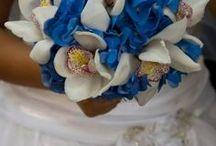 hortensia / frumoasa floare otavitoare, originara din China si Japonia