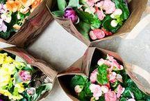 Plants | Flowers