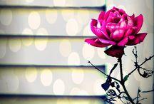 flowers / by ela karan