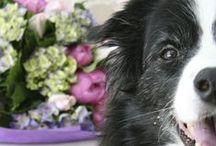 Pet Tips & Tricks / Pet care