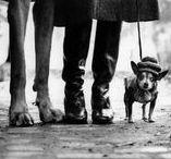 Elliott Erwitt - 1928 - / (26 juillet 1928 à Paris - ) est un photographe américain, né de parents russes-juifs. Il a passé dix ans de son enfance en Europe notamment en Italie, Allemagne et France avant que ses parents n'émigrent en 1938 aux États-Unis, à New York puis à Chicago puis à Los Angeles Robert Capa sera l'un des premiers à le remarquer et à l'inviter à devenir membre de l'agence Magnum. Agence qu'il présidera quelques années plus tard.