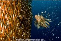 Underwater Photo Competition Winners / Fabulous photos that have won prizes in underwater photography contests