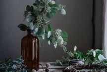 Plant Decorum: ДОМ