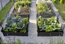Potager Garden / Ideas and inspiration to help with my plans on downsizing my large family vegetable garden to smaller Potager garden