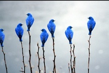 Feathered Friends  / by Alicia McIntyre