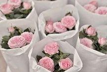 Garden+Flowers