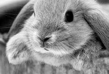 Rascally Rabbits