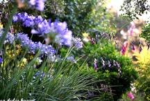 Garden and patio / a relaxing life