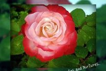 A Rose 4 you my friend... / I love flower power...) http://www.solkarina15.com