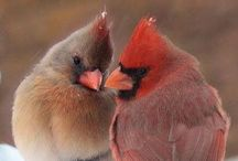 Winter cardinals / by Sherry Steele