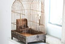 Birdcages / by Teri B