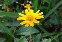 Flor / Florzinha do campo
