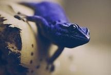 Reptilien