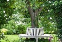 GARDEN Aesthetics / garden aesthetic items / by karen campbell