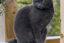 Love my Cats=^.^=