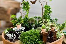 GARDEN Interior, Terrariums & Fairylands 1 of 2 / house plants, terrariums and fairy gardens / by karen campbell