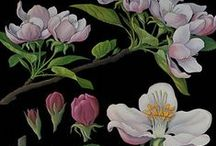 VISUAL ARTISTRY Botanical Prints or Something that Reminds Me of Them / antique botanical prints / by karen campbell