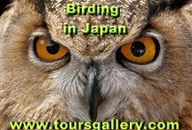 Birds & Wildlife / www.toursgallery.com Join our Hokkaido Nature Tour in Japan in October. We also have a Costa Rica tour next September.