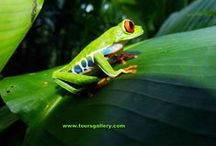 Costa Rica / Toursgallery.com takes small Up-market groups of nature lovers to Costa Rica. Join our September 2018 Tour.