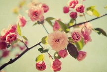 Wedding Style: Flowers