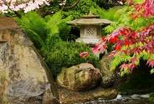 Japanese Gardens / by Heidi Johnson