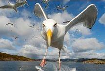 Stunning Bird Photography