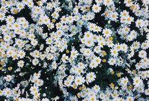 Amor. Espalhe Flores / #espalheflores