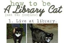 Library Cats / Every library needs a library cat. Cute kittens, kitty antics, and books, books, books.