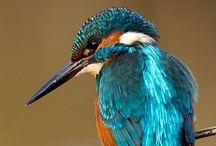 Ornithology / Bird Life