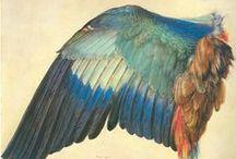 A glimpse | Albrecht Dürer