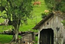 Life at Farm