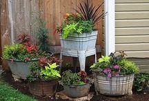 Garden/Yard / Gardening and Yard Work- Love it! / by Debbie Boyd