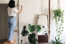 plants for the home / Plants for the home. Greenery in all its glory. From succulents, to trailing plants for your hanging baskets, from big potted indoor plants, to plants for your conservatory. Inspiration to bring more nature into your home. Try adding a plant gang to your interior living space.