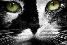 _Animals_
