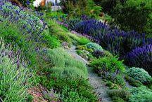 Sloped gardens