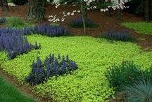 Garden carpets