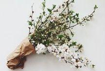 Plants, flowers, & herbs