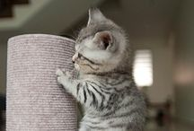 Cute Cats and Kittens / Cute and funny cats and kittens pictures and gifs. / by LOL Cute Animals