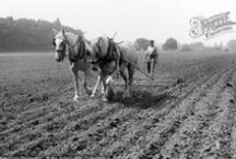 Farming & Countryside Nostalgia / Nostalgic, historic images of the countryside, farming and agriculture in the UK. Captured by Francis Frith photographers, or otherwise.