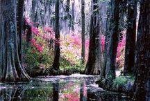 Nature add  its best