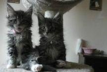 Cat  cat cat.s