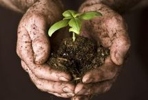 Get Your Hands Dirty / We're always digging in the dirt. You should be too!  / by Northwest Outdoor Lighting