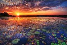 Sunsets  / by Lori