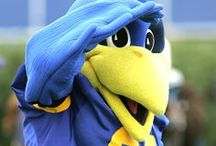 YoUDee and Baby Blue / Pictures and videos of everyone's favorite Blue Hen mascot duo.