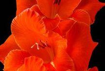 Orange, Favorite Color in My Teens / Some of my favorite things as a teen, especially orange sherbet! / by Gail Baugniet