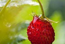 Giving Myself the Berries / by Gail Baugniet