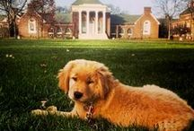 #proUDpets / Pets who make the University of Delaware proud! / by University of Delaware